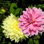 couple-de-fleurs